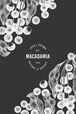 Hand drawn macadamia branch and kernels design template. Organic food vector illustration on chalk board. Vintage nut illustration. Engraved style botanical banner. Vecteurs