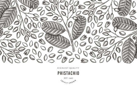 Hand drawn phistachio branch and kernels design template. Organic food vector illustration on white background. Retro nut illustration. Engraved style botanical banner. Ilustrace