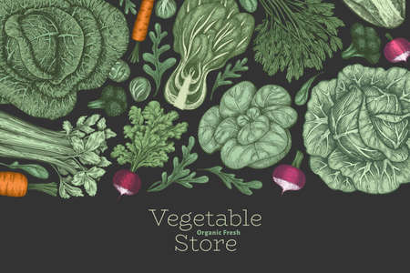 Hand drawn vintage color vegetables design. Organic fresh food vector banner template. Retro vegetable background. Traditional botanical illustrations.
