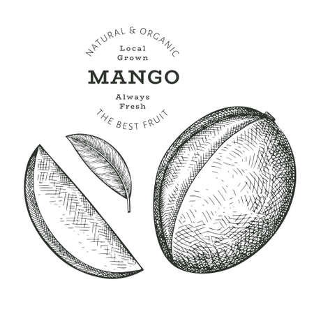 Hand drawn sketch style mango. Organic fresh food vector illustration isolated on white background. Retro exotic fruit illustration. Engraved style botanical picture.