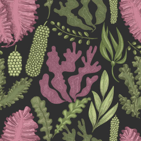 Seaweed seamless pattern. Hand drawn vector seaweeds color illustration. Engraved style sea food banner. Retro sea plants background 矢量图像