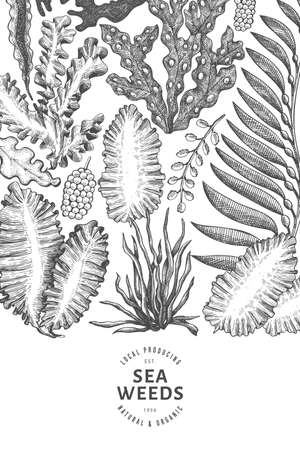 Seaweed design template. Hand drawn vector seaweeds illustration. Engraved style sea food banner. Retro sea plants background