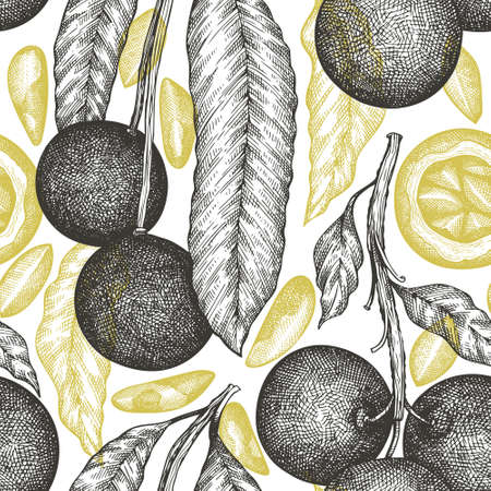 Hand drawn brazilian nut branch and kernels seamless pattern. Organic food vector illustration on white background. Retro nut illustration. Engraved style botanical background. 矢量图像
