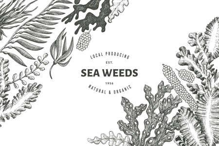 Seaweed design template. Hand drawn vector seaweeds illustration. Engraved style sea food banner. Retro sea plants background Vecteurs