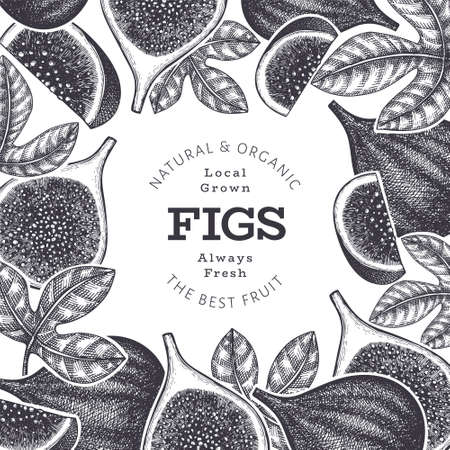 Hand drawn fig fruits design template. Organic fresh food vector illustration. Retro fig fruit banner. 矢量图像