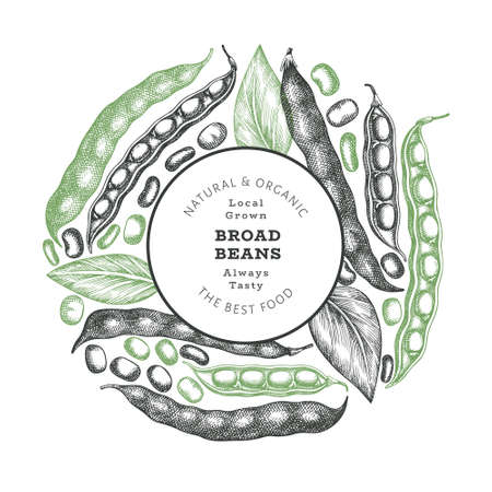 Hand drawn dragon fruit design template. Organic fresh food vector illustration on chalk board. Retro pitaya fruit banner.
