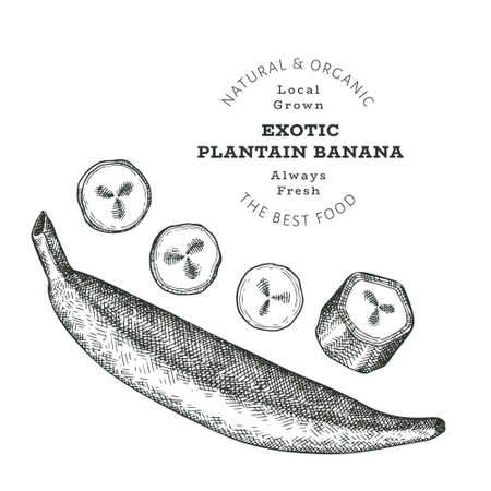 Hand drawn sketch style plantain. Organic fresh food vector illustration isolated on white background. Retro exotic fruit illustration. Engraved style botanical picture.