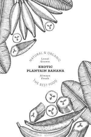 Hand drawn sketch style plantain banner. Organic fresh fruit vector illustration. Retro exotic banana fruit design template