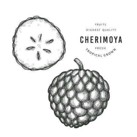 Hand drawn sketch style cherimoya. Organic fresh fruit vector illustration. Engraved style botanical picture.