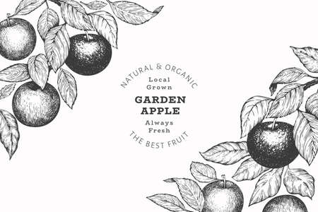 Apple branch design template. Hand drawn vector garden fruit illustration. Engraved style fruit retro botanical banner. 矢量图像