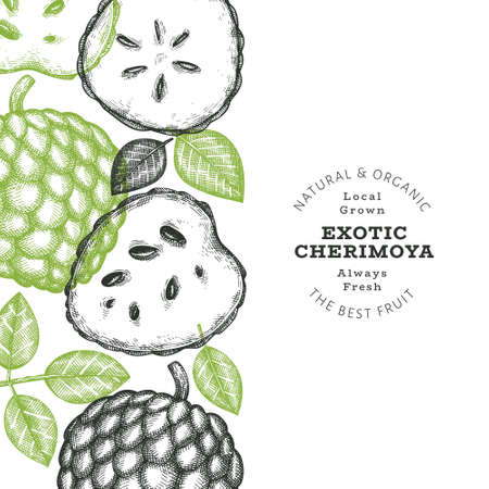 Hand drawn sketch style cherimoya banner. Organic fresh fruit vector illustration. Engraved style botanical design template. 矢量图像