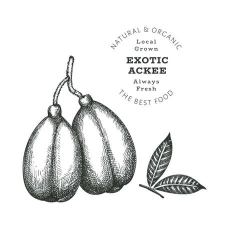 Hand drawn sketch style ackee. Organic fresh food vector illustration isolated on white background. Retro exotic fruit illustration. Engraved style botanical picture.