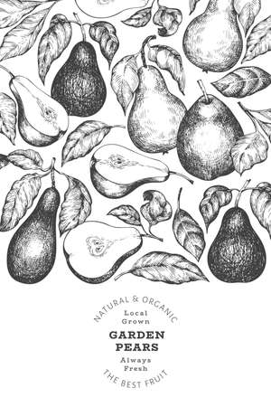 Pear design template. Hand drawn vector garden fruit illustration. Engraved style garden retro botanical banner.