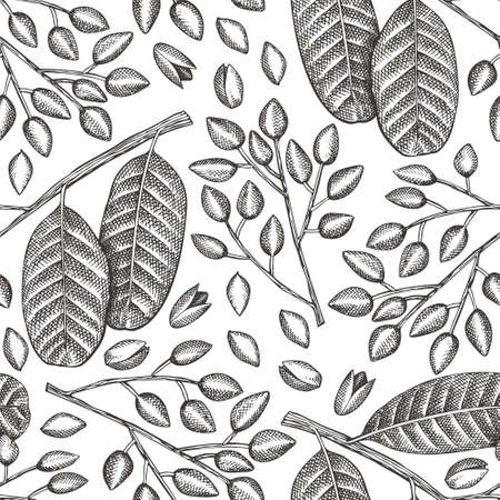 Hand drawn phistachio branch and kernels seamless pattern. Organic food vector illustration on white background. Retro nut illustration. Engraved style botanical background.