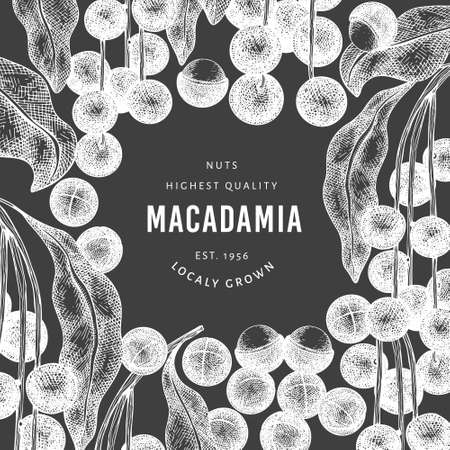 Hand drawn macadamia branch and kernels design template. Organic food vector illustration on chalk board. Vintage nut illustration. Engraved style botanical banner.