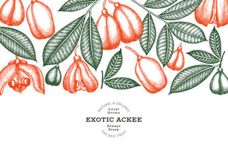 Hand drawn sketch style ackee banner. Organic fresh food vector illustration. Retro exotic fruit design template. Engraved style botanical background.