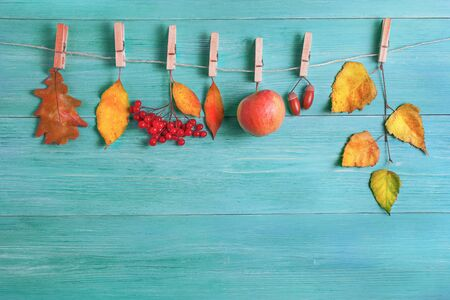 leaves, apples, acorns in autumn on a wooden background. The leaves hang on a rope with clothespins. Standard-Bild
