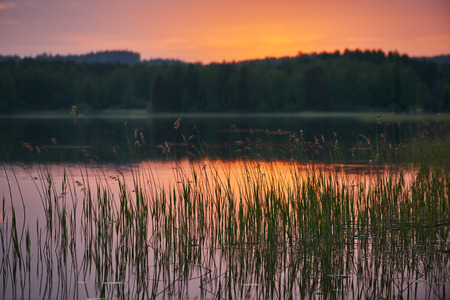 plantas acuaticas: Lago finland�s al atardecer con las plantas de agua en el enfoque y fondo borroso intencional