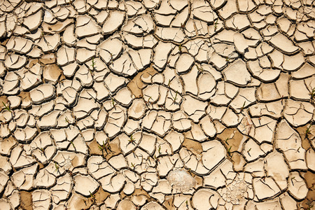 dried up: pattern of land dried up by drought
