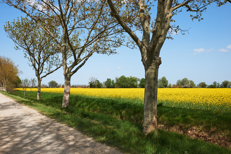 french countryside: French countryside with trees, road, lawns, rapeseed flowers and sky in spring
