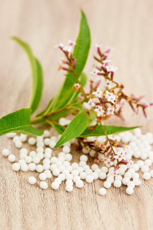 globule: Homeopathic granules scattered on a wooden table with a medicinal plant Stock Photo