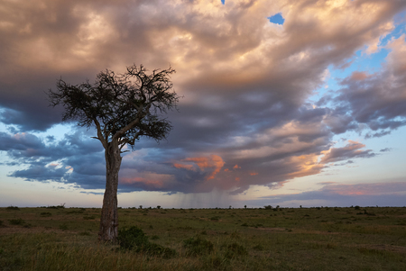 A storm is coming in the Masai Mara park in Kenya