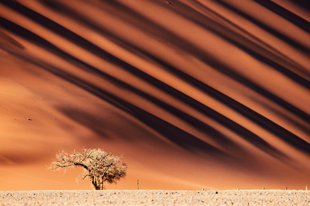 Very high red sand dune in the Namib Desert Banco de Imagens