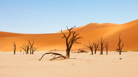 beautiful landscape in the Namib desert at Deadvlei