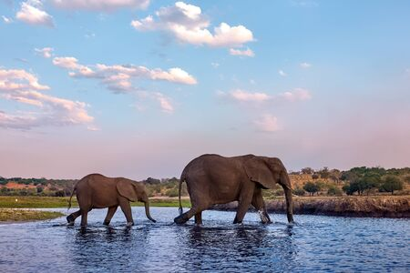 Two elephants, an adult female and her baby, walk along the river bank. Imagens