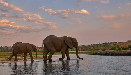 Two elephants, an adult female and her baby, walk along the river bank. 免版税图像