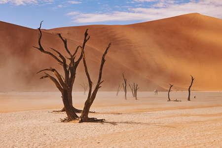 beautiful landscape in the Namib desert at Deadvleii.
