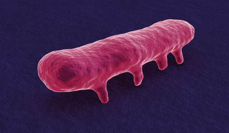 bacterias: una bacteria salmonella bajo el microscopio (3d) Foto de archivo