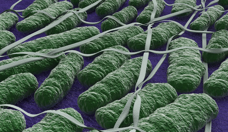 salmonella: some salmonella bacteria under the microscope (3d render)