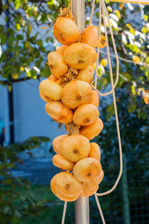irritate: String of white organic sweet Onions hanging for sale in a country fair Stock Photo