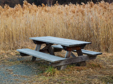 hardwoods: Outdoor public wooden pic nic table surrounded by tall reeds (Phragmites australis) near a mountain pond