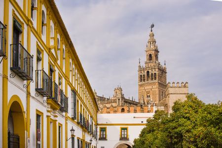 The Giralda bell tower of the Cathedral of Seville view from Patio des Banderas orange trees full of ripe fruits in the right