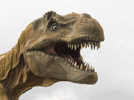 Head model of a Tyrannosaurus rex (T-rex) biggest carnivore dinosaur, white background