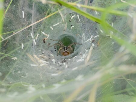 spider in the hole waiting for preys captured from the web Stok Fotoğraf