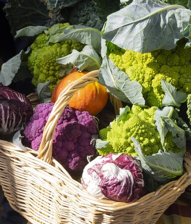 wicker basket full of colorful  cauliflower, radicchio, salad and pumpkins  for sale with other vegetables in a country market
