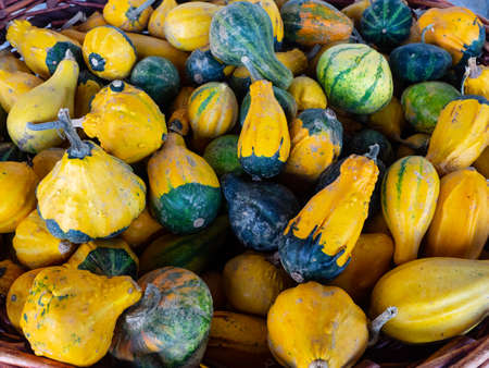 Mini Squash and Pumpkins of various shape and color displayed in a country market