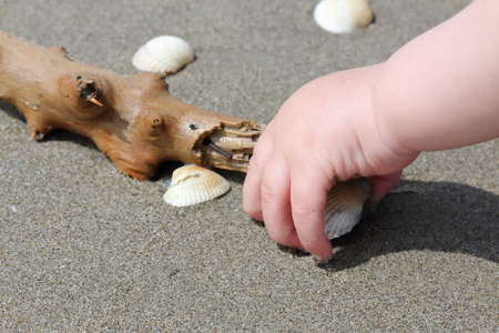 kid hand on a seashore picking up a shell