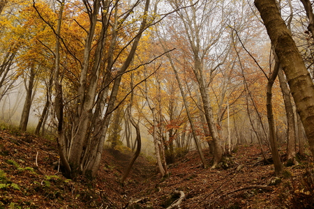 autumnal wood in the mist Imagens