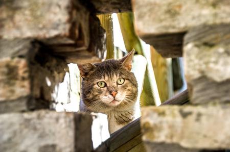 lurk: hidden cat