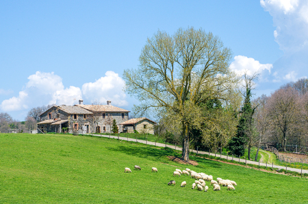 viterbo: Viterbo, Italy, April 2013: sheeps grazing with an old cottage in the background. Editorial