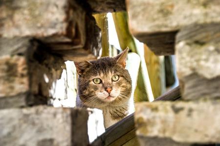 gaze: cat head hide gaze yellow eyes