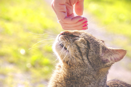 stroking: stroking the cat Stock Photo