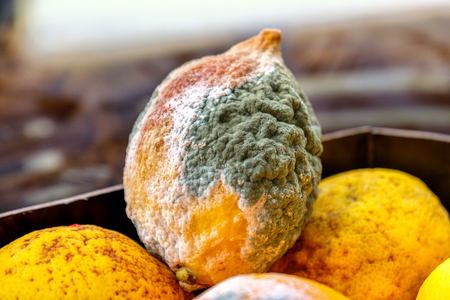lemon mold citrus fruits moldy Stock Photo