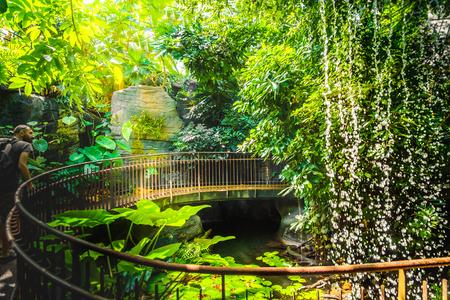 deep jungle walk waterfall adventurer man explorer artificial railing