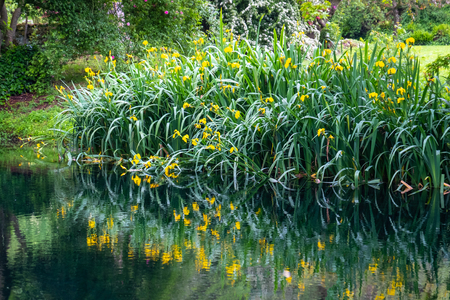 grass and flower reflections on water on river shore impressionist garden pond horizontal background