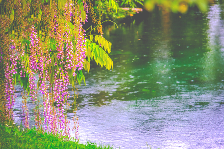 romantic spring river flower shore background with rain drops Stok Fotoğraf - 123125497